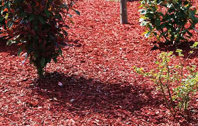 Puutarhat ja taimitarhat yms
